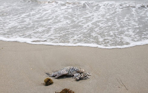 Công bố kết quả mẫu xét nghiệm nước biển ở Đà Nẵng