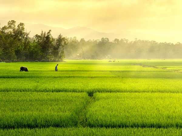 Mơ thấy cánh đồng là điềm báo lành hay dữ?