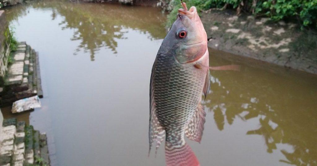 Mơ thấy câu cá điềm báo gì đánh số gì chắc trúng
